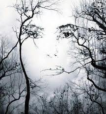 visage d'arbre