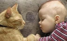 le chat et le bébé
