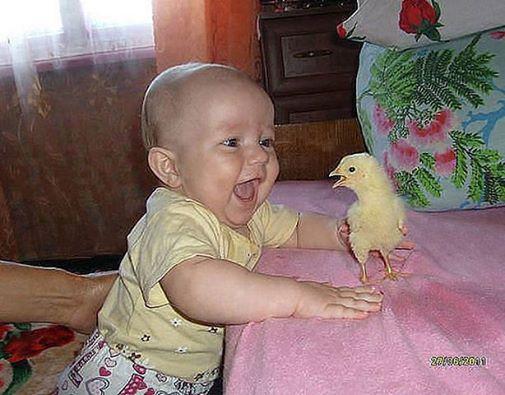 bébé et poussin